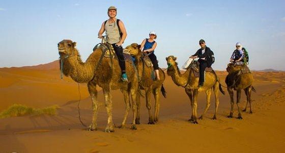 На верблюдах в пустыне