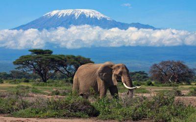 Килиманджаро гора